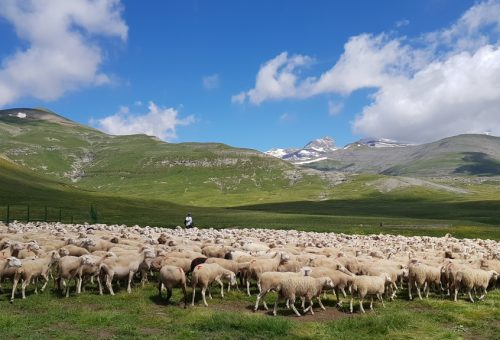 Once nuevos municipios podrán acogerse a las ayudas a la ganadería por la presencia del lobo y el oso